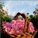 Rose Valley, rose-basket